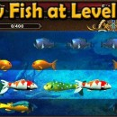 New Fish at Level 5 and 1+ year to VIP Fish